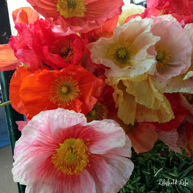 Poppies at Orange Grove markets