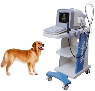 Máy siêu âm trong thú y