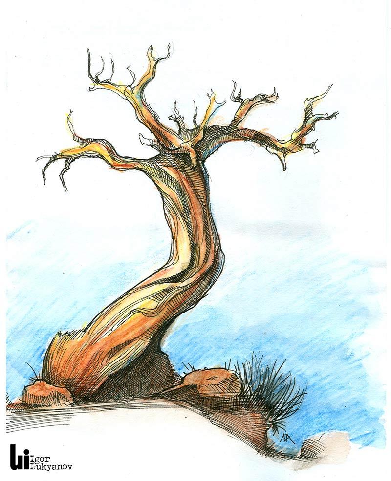 Croquis et dessins de nature - Dessin de nature ...