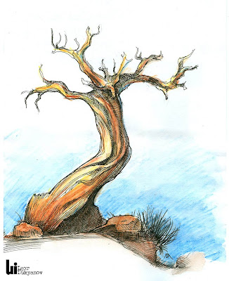 arbre pin dessin de nature (Crimée)
