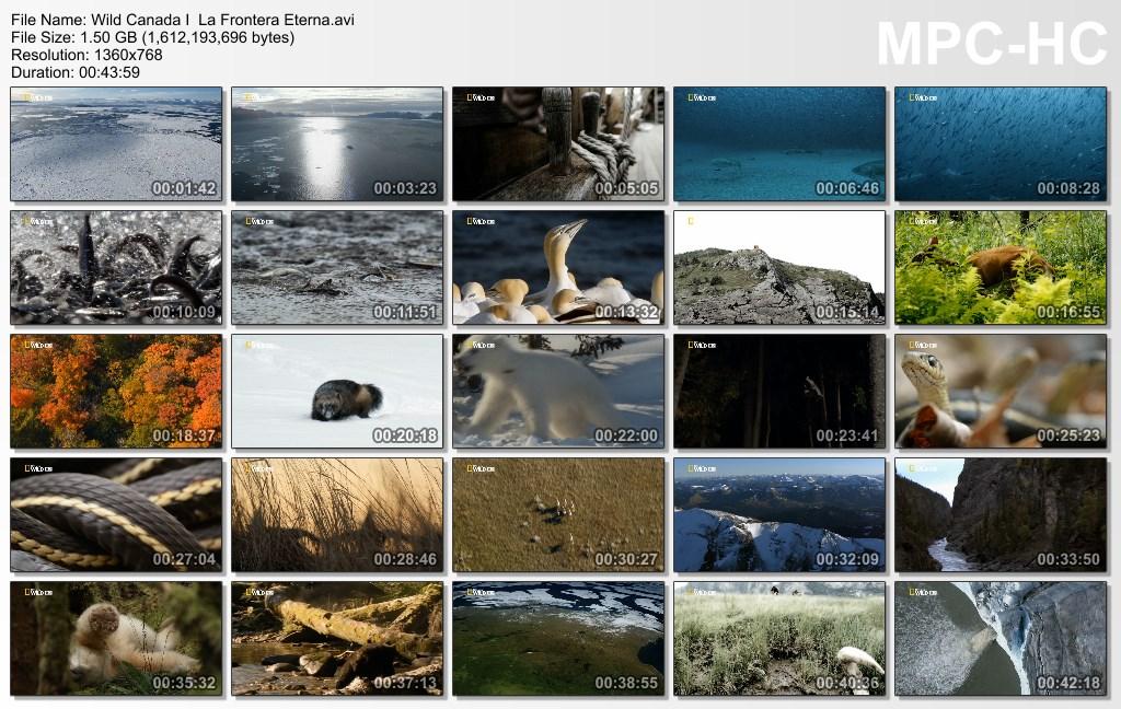 6GB|NATGEO|Wild Canada|HDTV|4-4|MEGA|Taykun7000