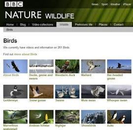 BBC-BIRDS