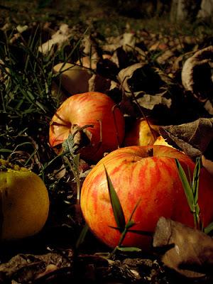 manzana de sidra alba hogar