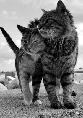 amor entre gatos