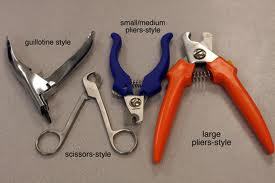 Definition Of Dog Grooming Equipment