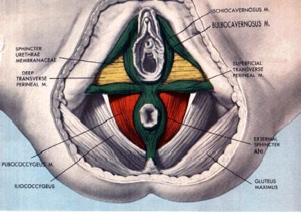 Notas Plenilúnicas de Helecho Verde: Anatomía femenina y los ...