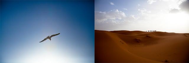 Morocco, Sahara, desert, bedouin, wandering, alone, flying, seagull, blue, sky, soaring