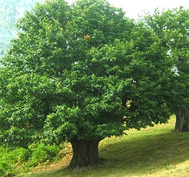 A lareira m xica el rbol de tu vida for Arboles para jardin que den sombra