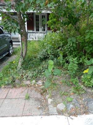 Riverdale Toronto front garden cleanup before Paul Jung Gardening Services