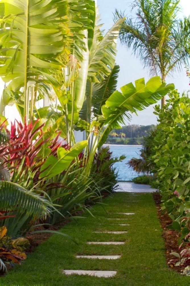 Dirtbin designs tropical gardens i love for Tropical garden designs