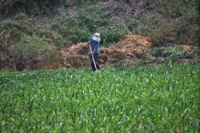 Οι αγρότες της Ελλάδας