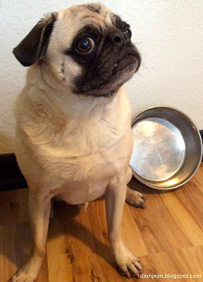Liam the pug looking suspicious by his empty food bowl