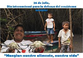26 de julio - Día Internacional para la defensa del Ecosistema Manglar
