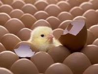 Ameaça à Postura de Ovos