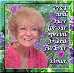 Purrs and Prayers for Auntie Elinor