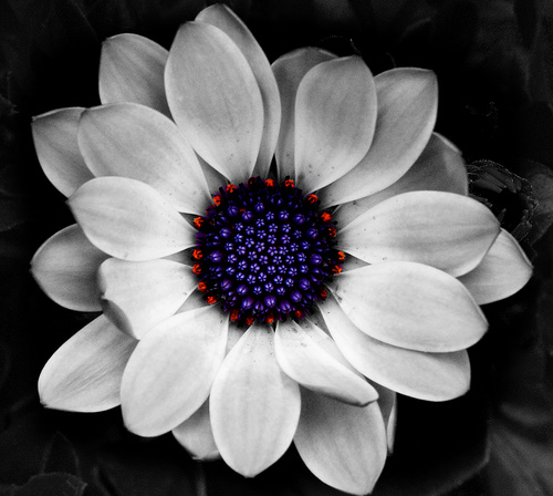 flowers for flower lovers artistic flowers wallpapers