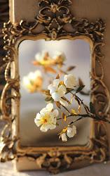 Ilona's Magnolia