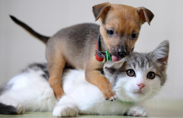 Very Funny Cute Cats And Puppies Pictures Captions N Pictur Best