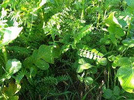 No-till - sund jord - Conservation Agriculture