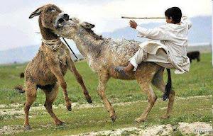 گاهی اختلاف دو الاغ باعثِ سقوطِ ملتها میشود!!!