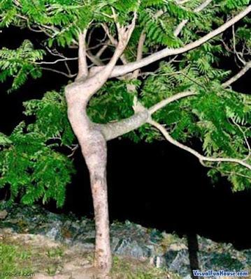 Ilusi Gambar Pokok Menari