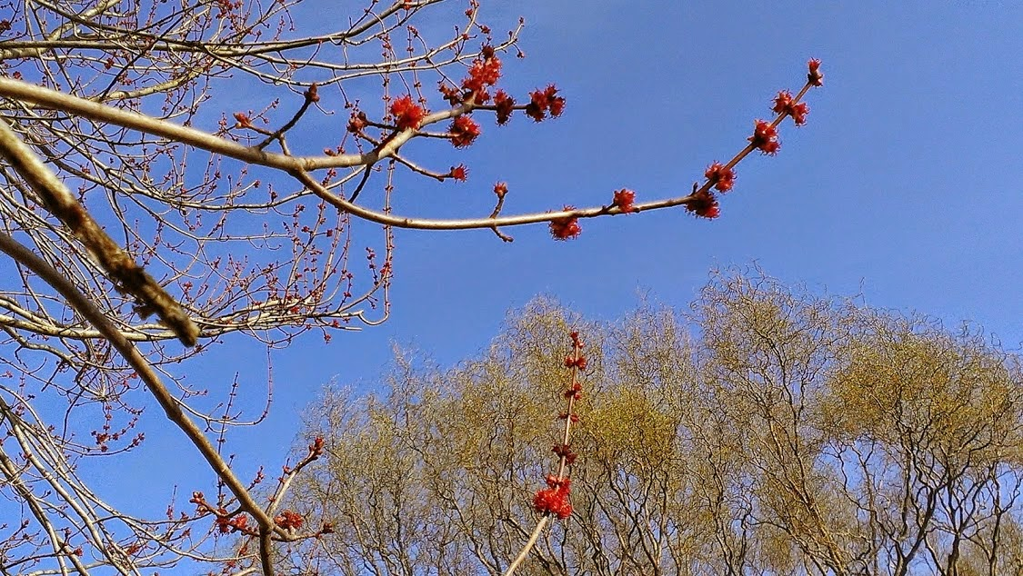 tree buds in May