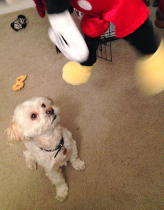 Dino's fascinated with Mickey Mouse