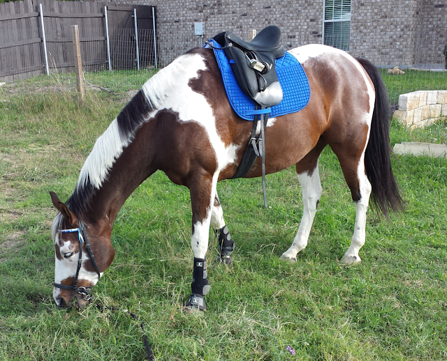 Riding in a bitless bridle Dr. Cook