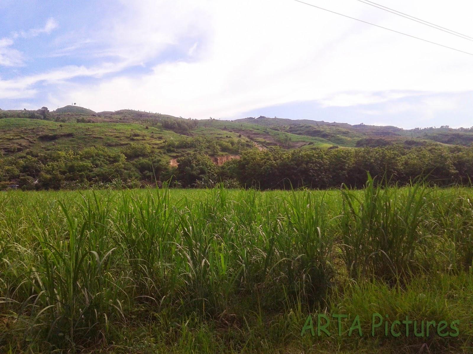 Pesona Keindahan Pegunungan Kendeng Sukolilo Terancam Hilang