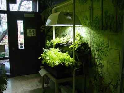 Garden tips an indoor vegetable garden the organic way for Eco indoor garden house