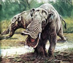 Platybelodon-danovi1-738x591.jpg