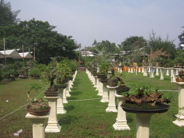 bonsai surabaya
