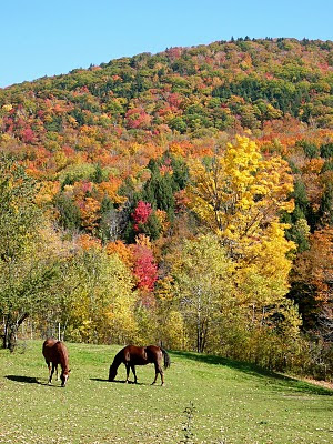 horse+fall+foliage+edited.jpg
