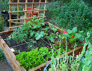 DIY Square Foot Garden with thriving plants