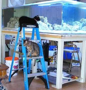 Giant aquariums 300 gal fish tank for Used fish tanks for sale on craigslist