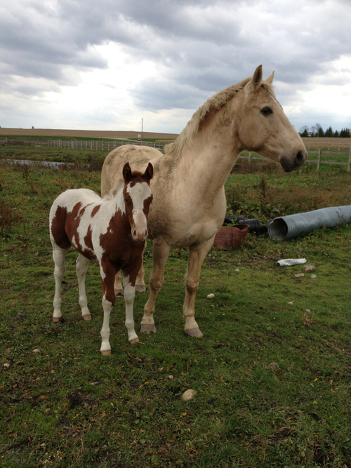 Beautiful Horse Wallpapers Mother And Baby