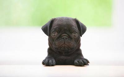 Puppy_DOg_02
