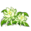 FarmVille Night Cereus Crop  (Day 12)