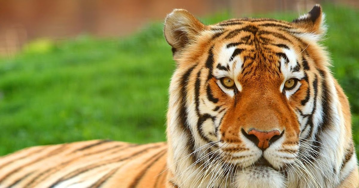 Image Result For Animal Wallpapers K