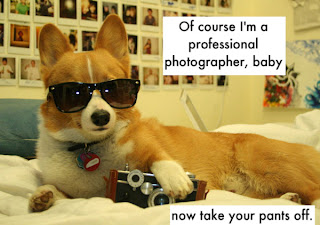 funny cute corgi photographer