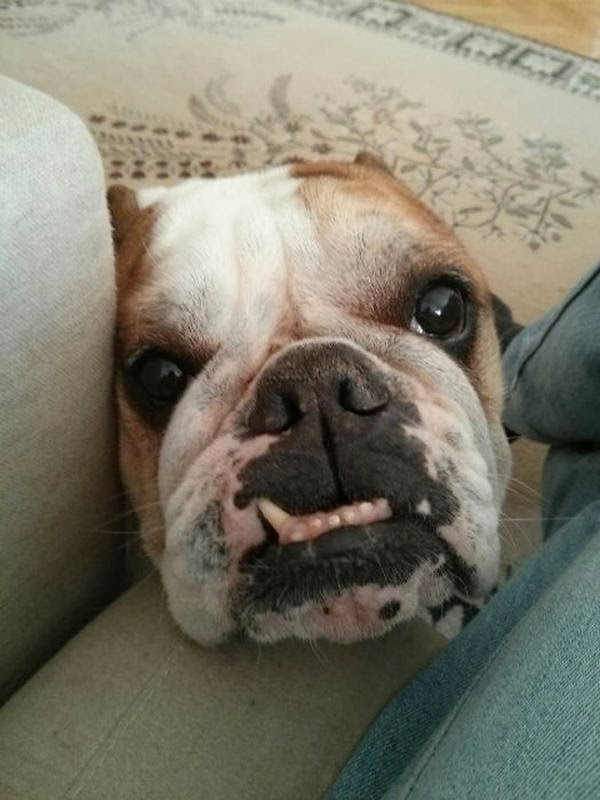 Cute dogs - part 7 (50 pics), dog with underbite