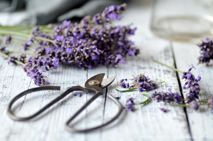 lavender flowers scissors impressions