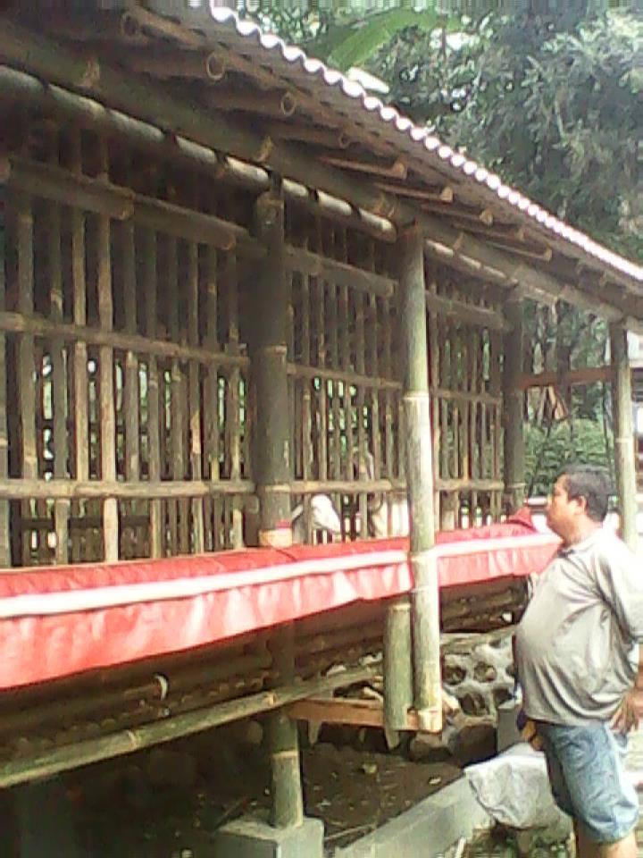 Ternak Domba Garut Ajilbab Com Portal | Foto Artis - Candydoll