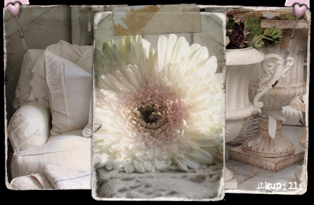 Kim's bloemen woon en kadowinkel