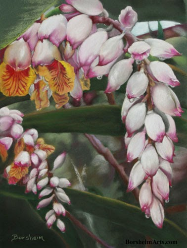 Shell Ginger Tropical plant pastel painting art raindrops