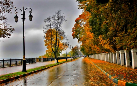 Yellow Autumn Leaves On Street In Rainy Day