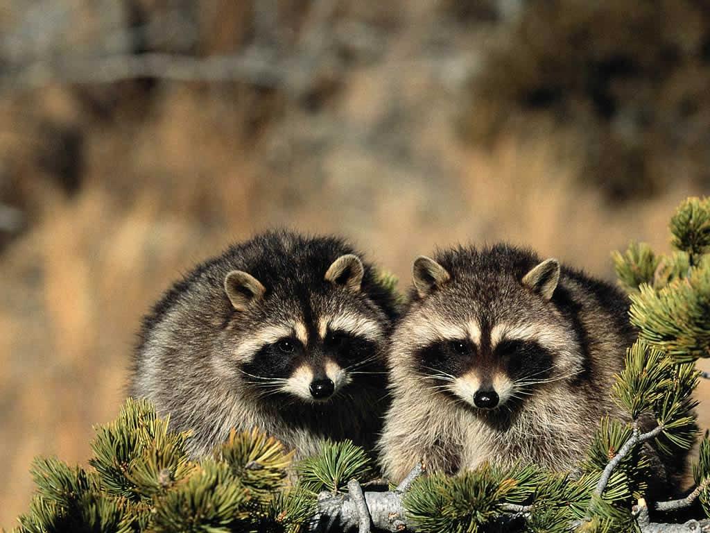 http://3.bp.blogspot.com/-jAw_2PZa6PI/T-gAq8Tx7xI/AAAAAAAACeU/4WnY15R2L6U/s1600/Free+Animal+Wallpapers+%252826%2529.jpg