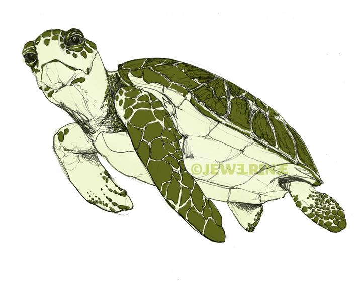 Sea turtle drawing - photo#20