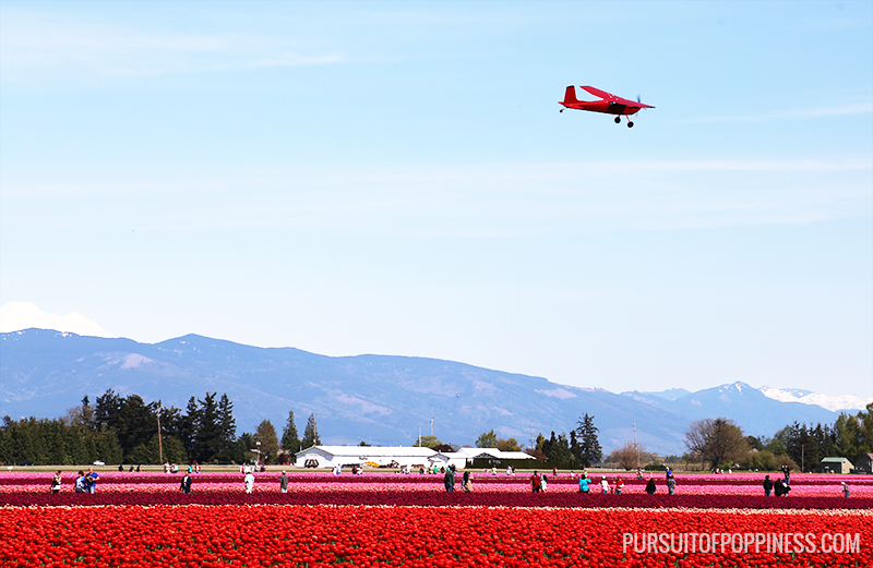 plane view of the skagit valley tulip festival