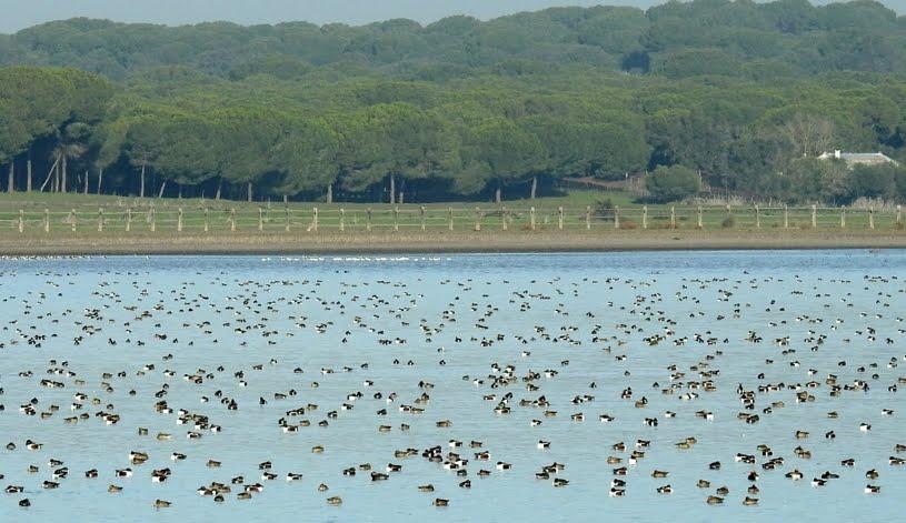 Viaje a Doñana, 1 al 4 de noviembre